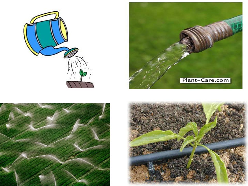 Watering. Which system is the best