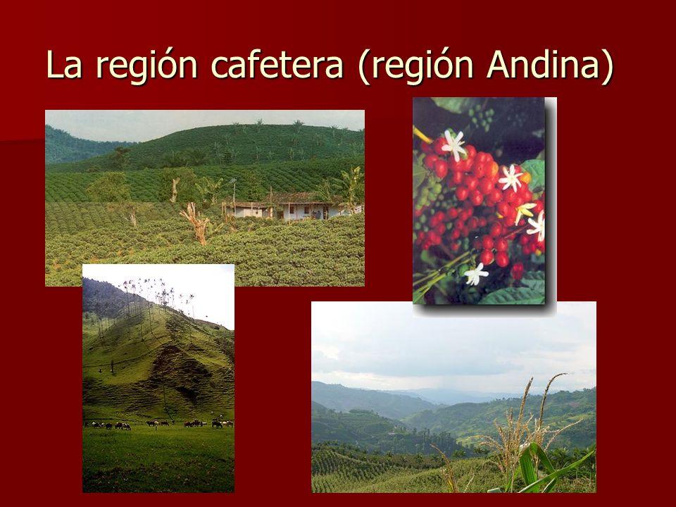 La región cafetera (región Andina)