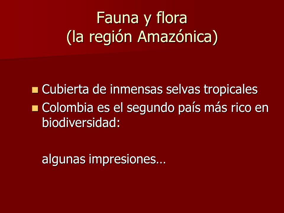 Fauna y flora (la región Amazónica)