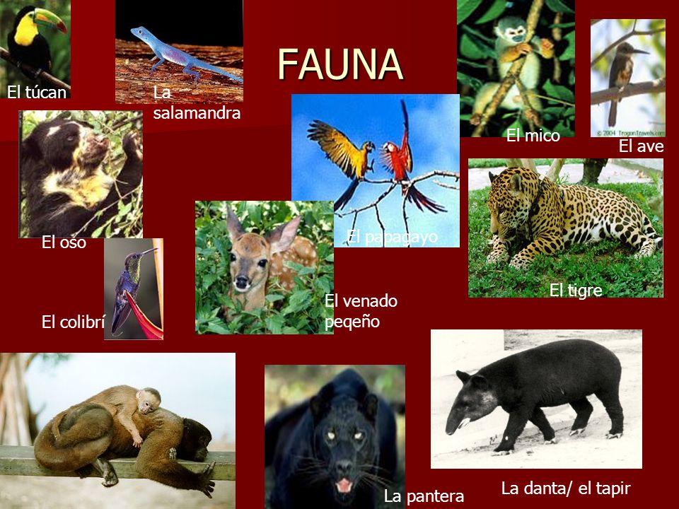 FAUNA El túcan La salamandra El mico El ave El papagayo El oso