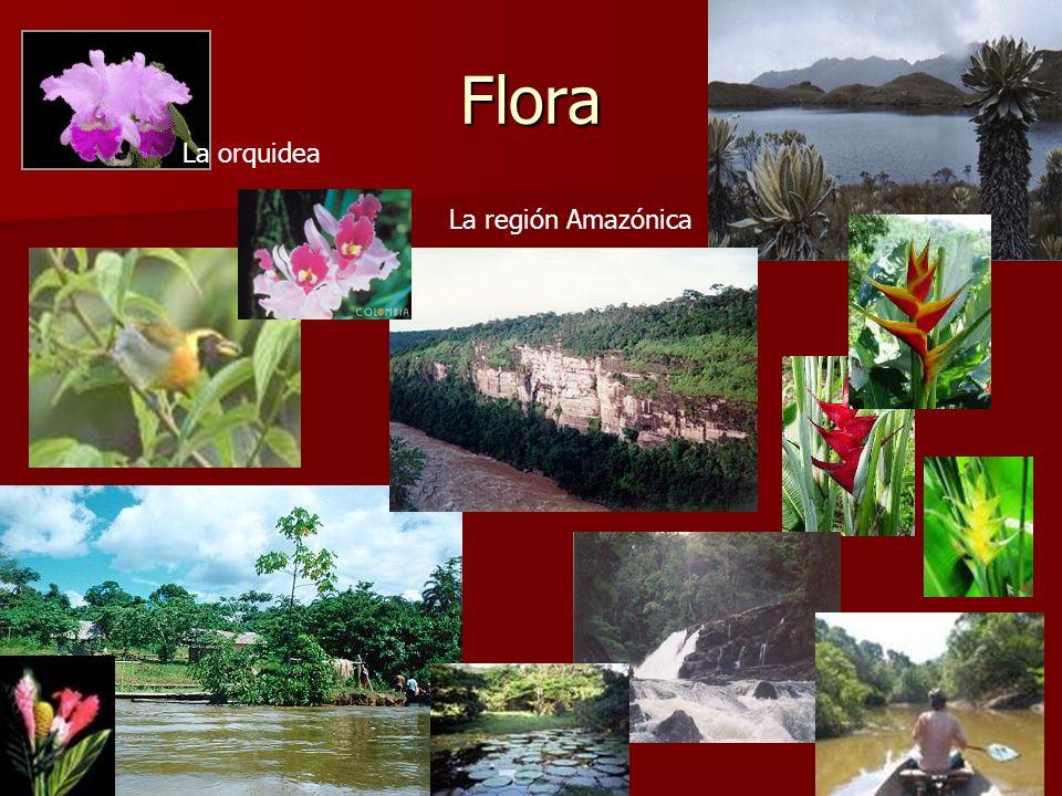 Flora La orquidea La región Amazónica