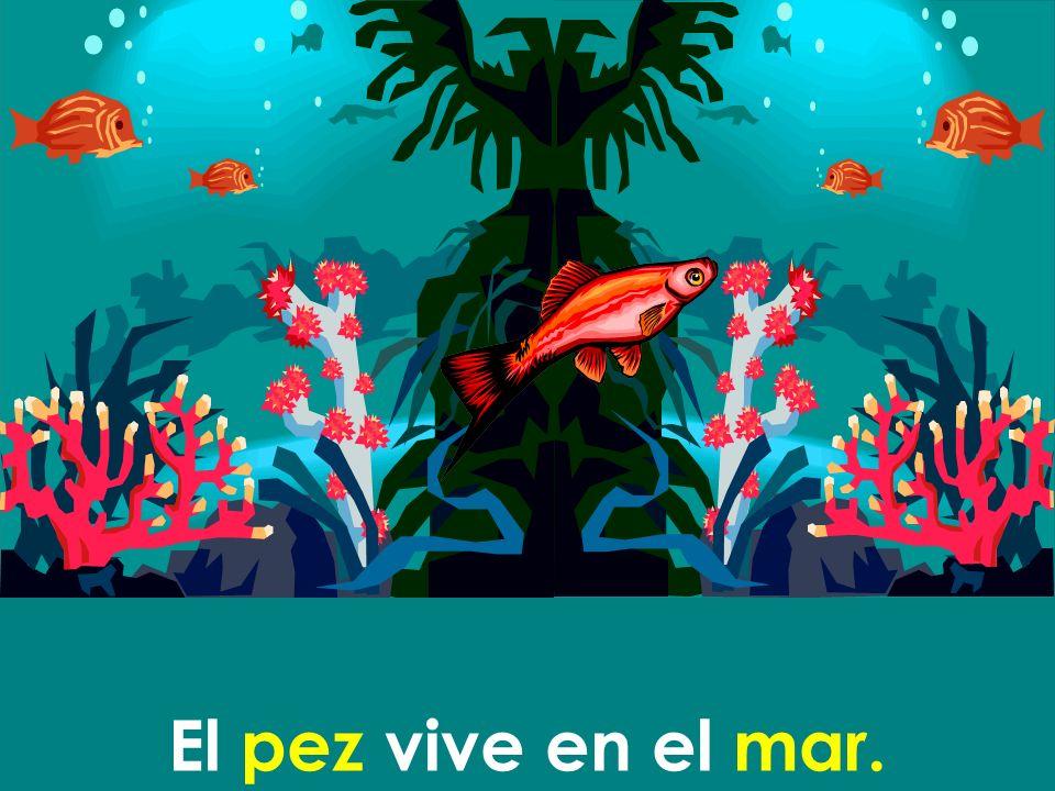 El pez vive en el mar.