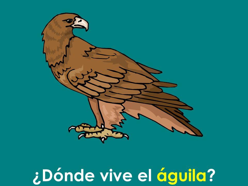 ¿Dónde vive el águila