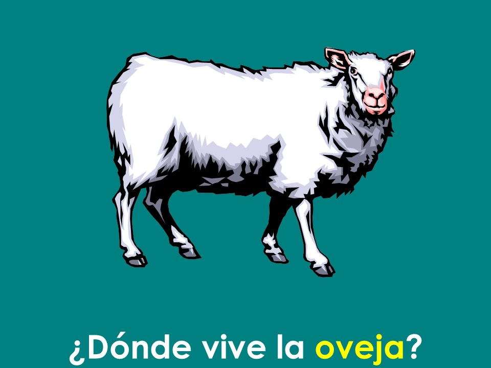 ¿Dónde vive la oveja