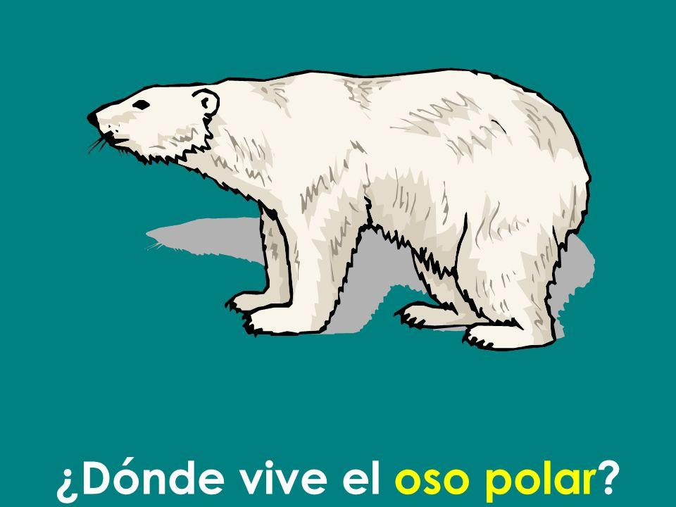 ¿Dónde vive el oso polar
