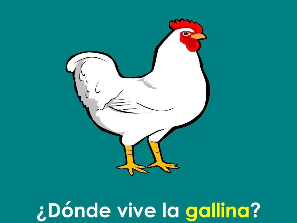 ¿Dónde vive la gallina