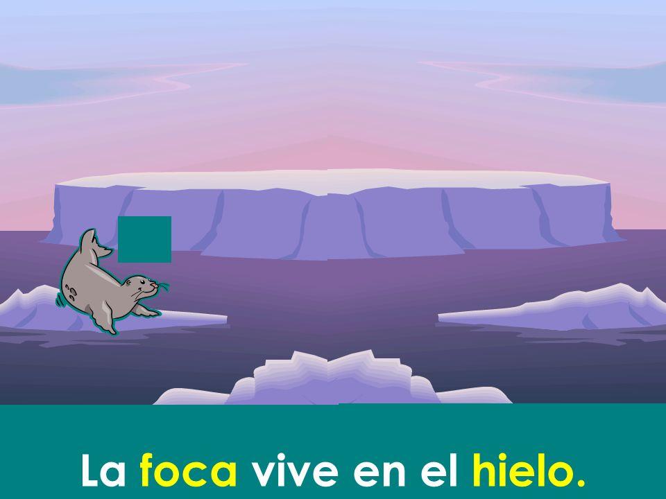 La foca vive en el hielo.