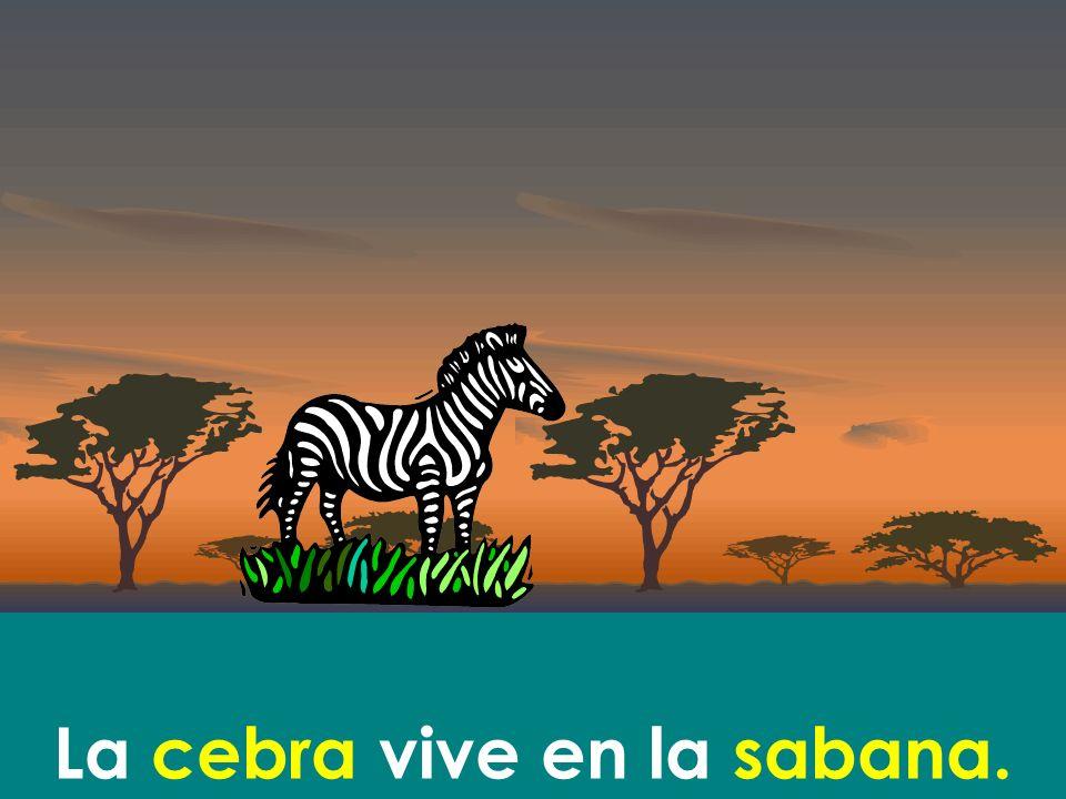 La cebra vive en la sabana.