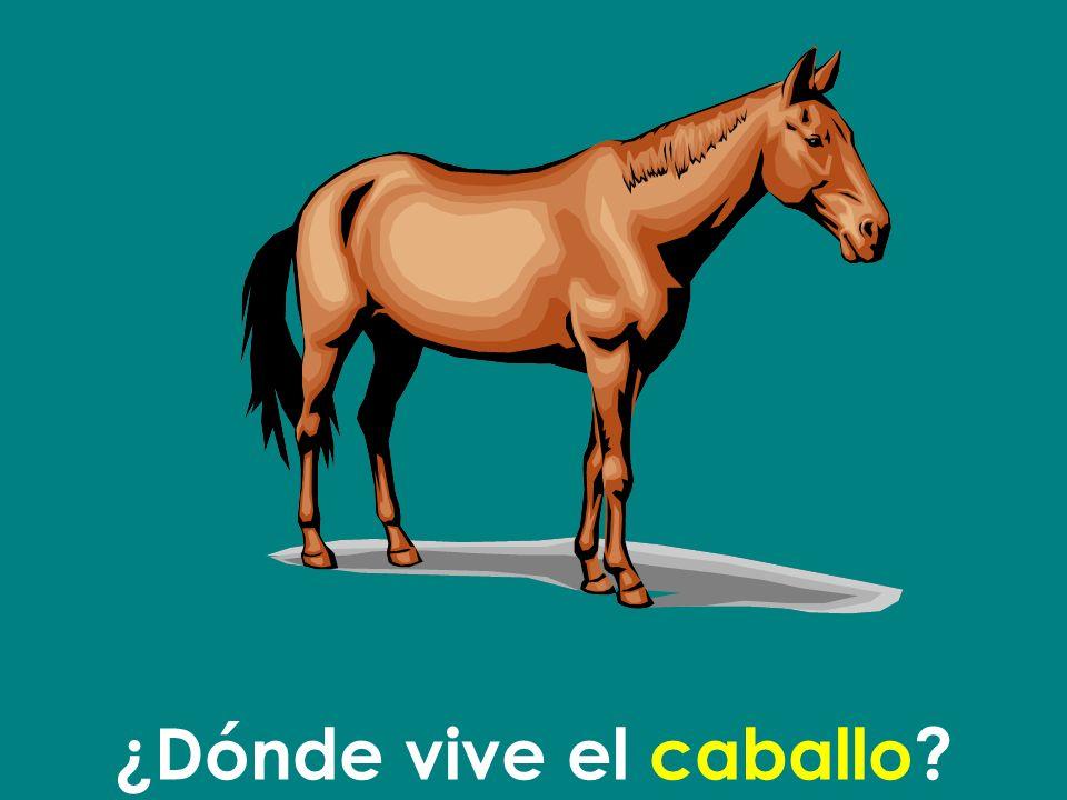 ¿Dónde vive el caballo