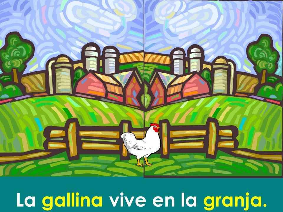 La gallina vive en la granja.