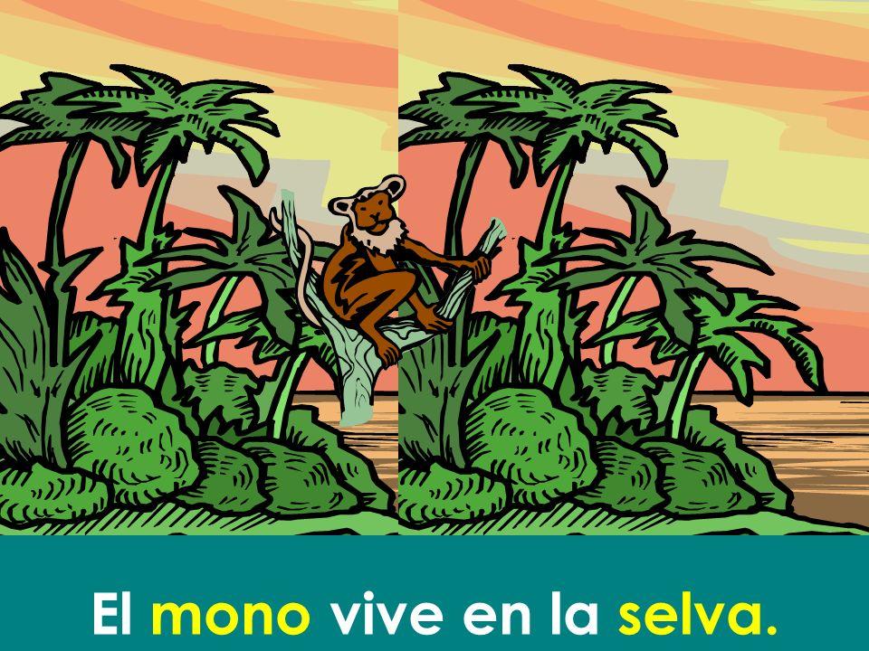 El mono vive en la selva.