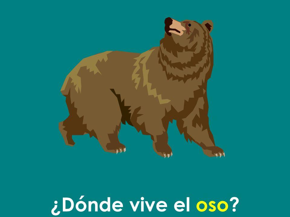¿Dónde vive el oso
