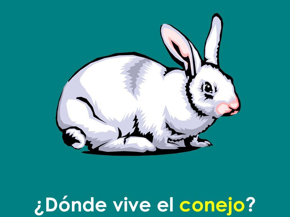 ¿Dónde vive el conejo
