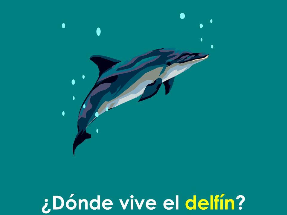 ¿Dónde vive el delfín