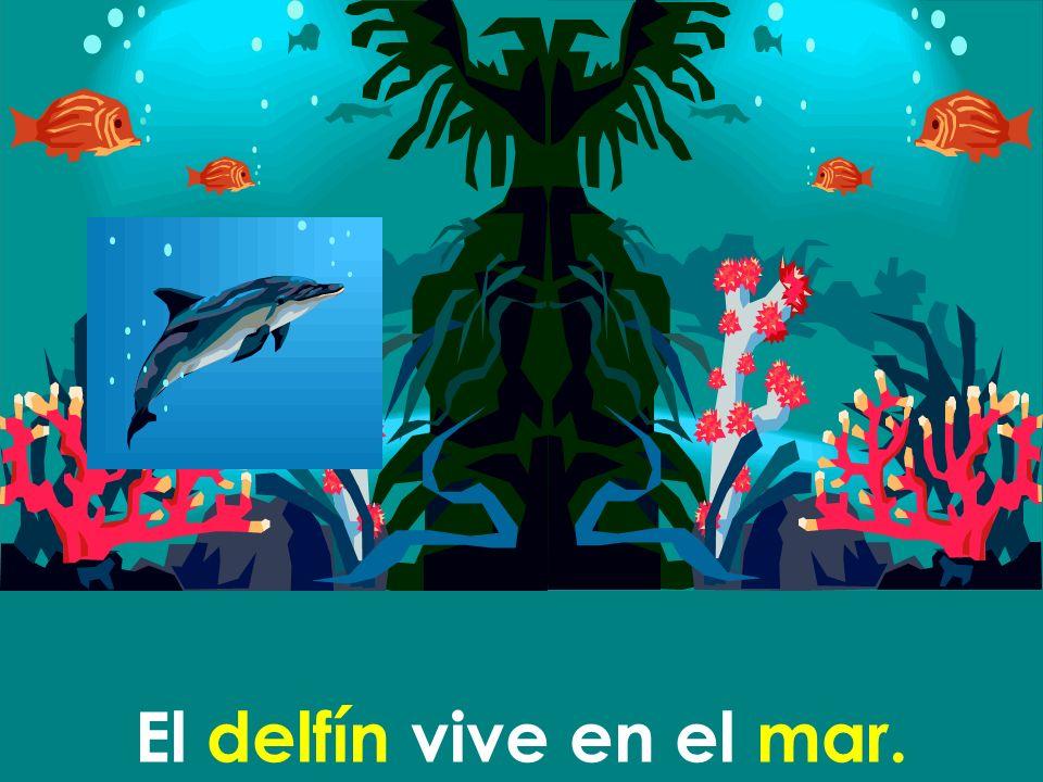 El delfín vive en el mar.