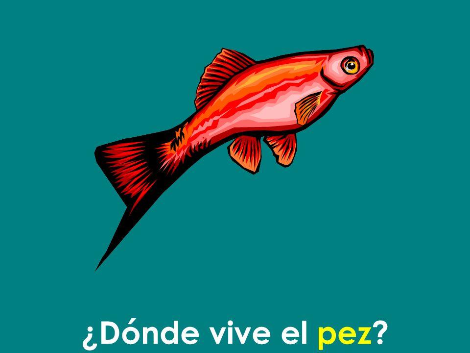 ¿Dónde vive el pez