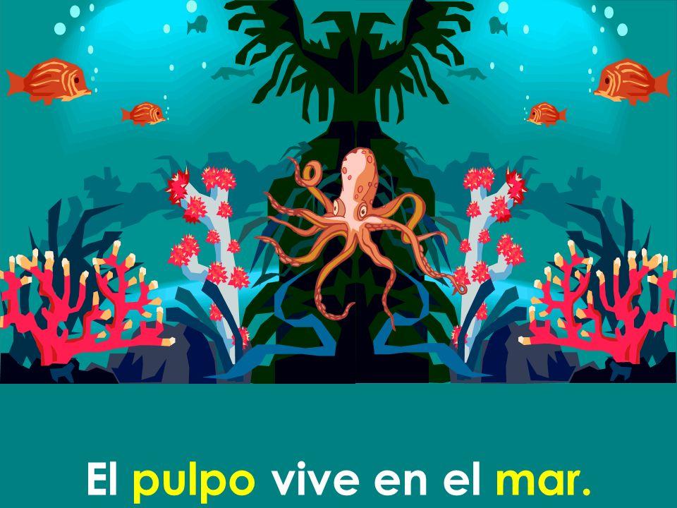 El pulpo vive en el mar.
