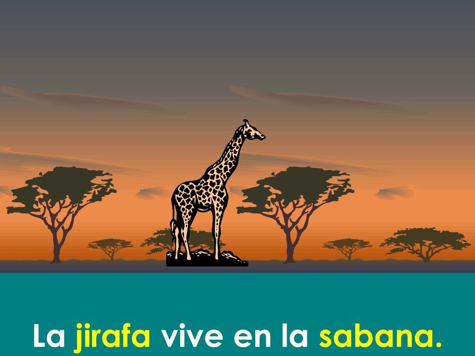 La jirafa vive en la sabana.