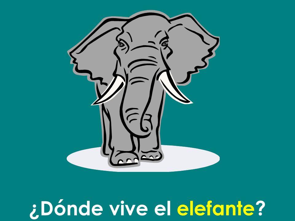 ¿Dónde vive el elefante