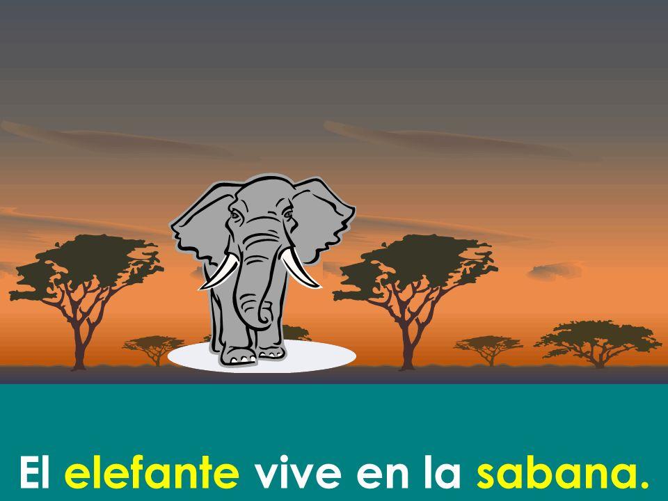 El elefante vive en la sabana.