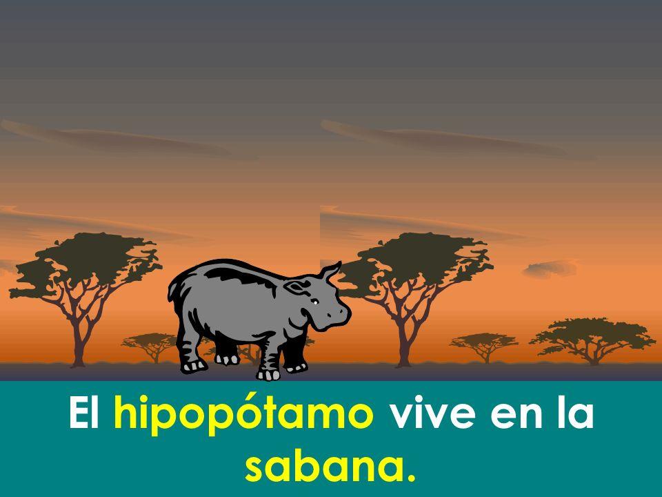 El hipopótamo vive en la sabana.