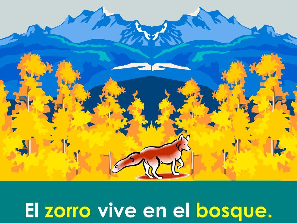El zorro vive en el bosque.