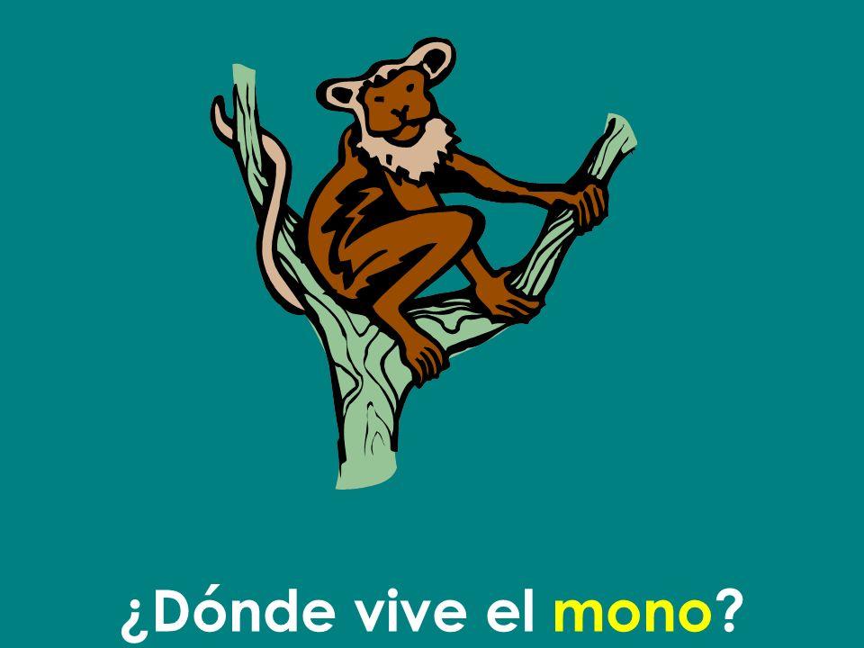 ¿Dónde vive el mono