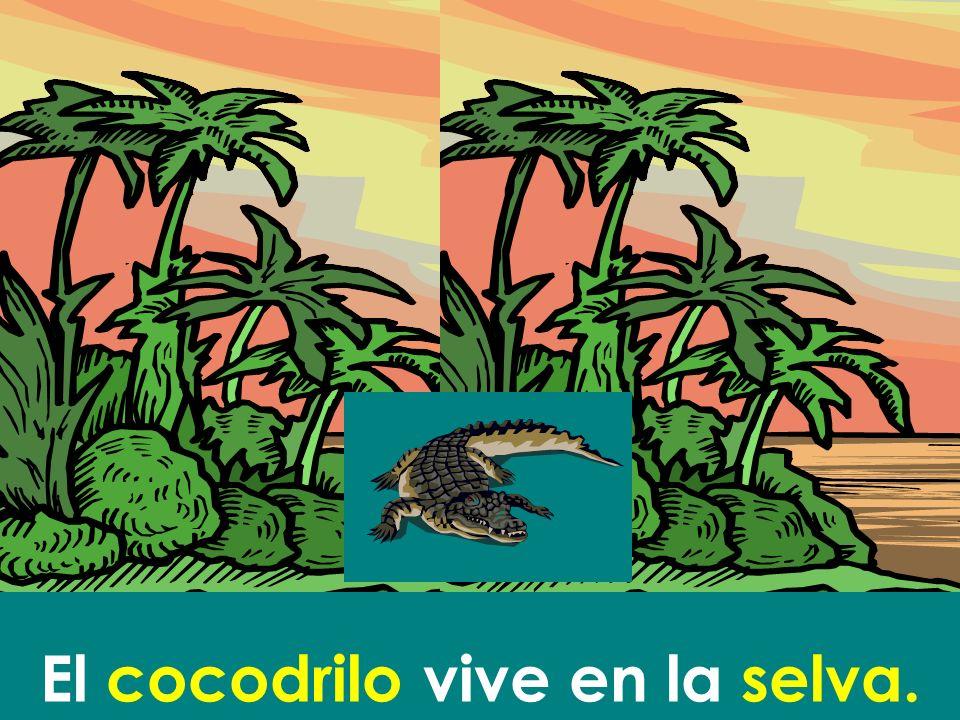 El cocodrilo vive en la selva.