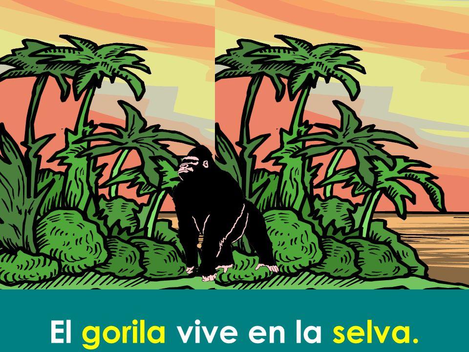 El gorila vive en la selva.