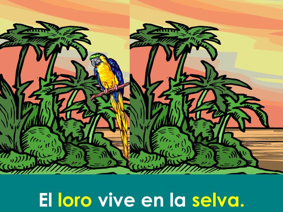 El loro vive en la selva.