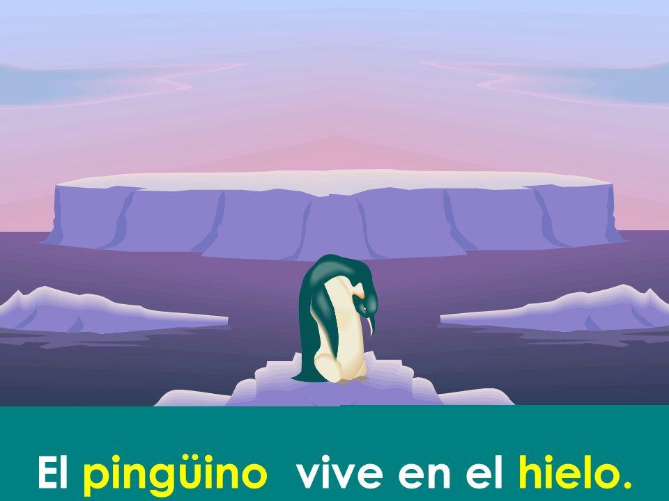 El pingüino vive en el hielo.