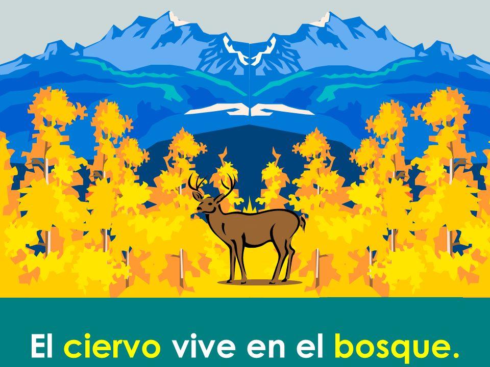 El ciervo vive en el bosque.