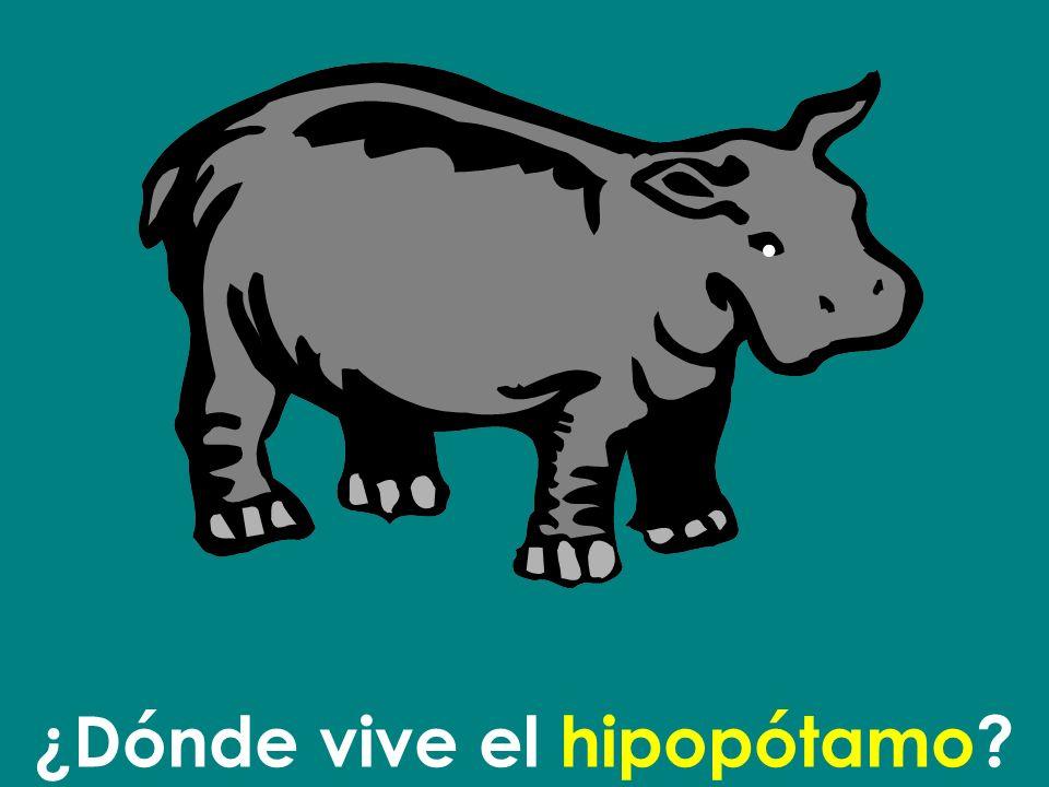 ¿Dónde vive el hipopótamo