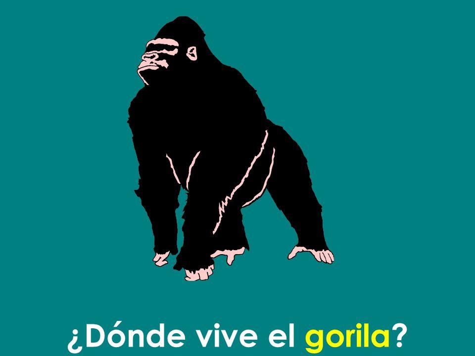 ¿Dónde vive el gorila