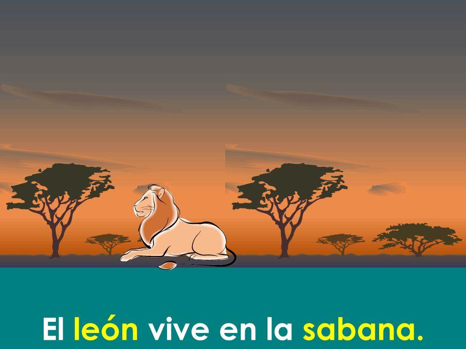 El león vive en la sabana.