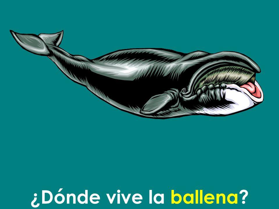 ¿Dónde vive la ballena