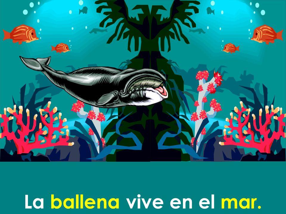La ballena vive en el mar.