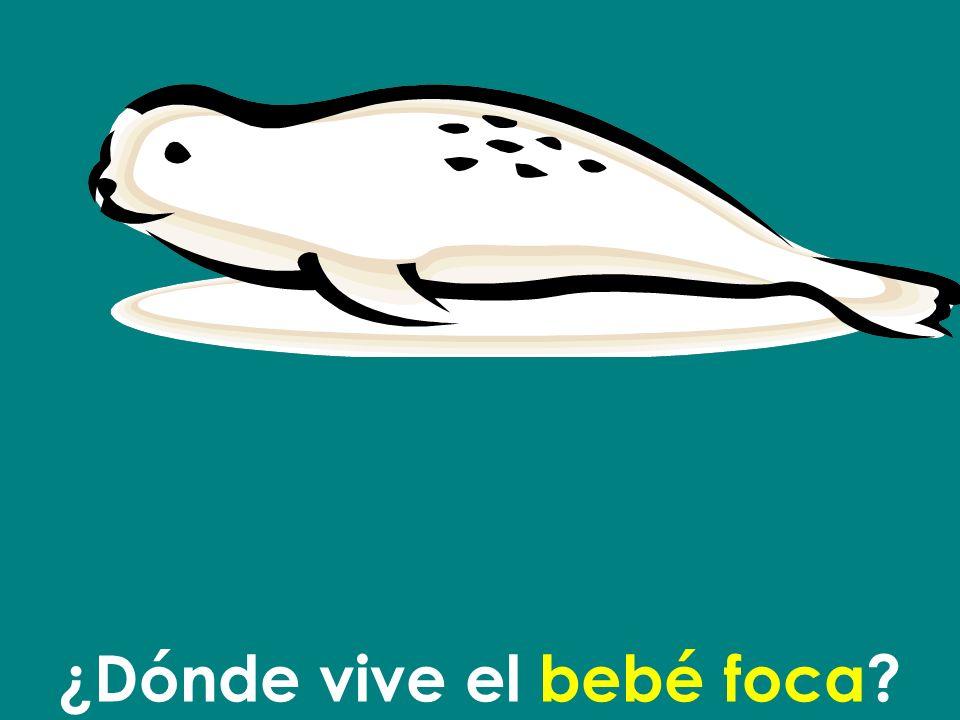 ¿Dónde vive el bebé foca