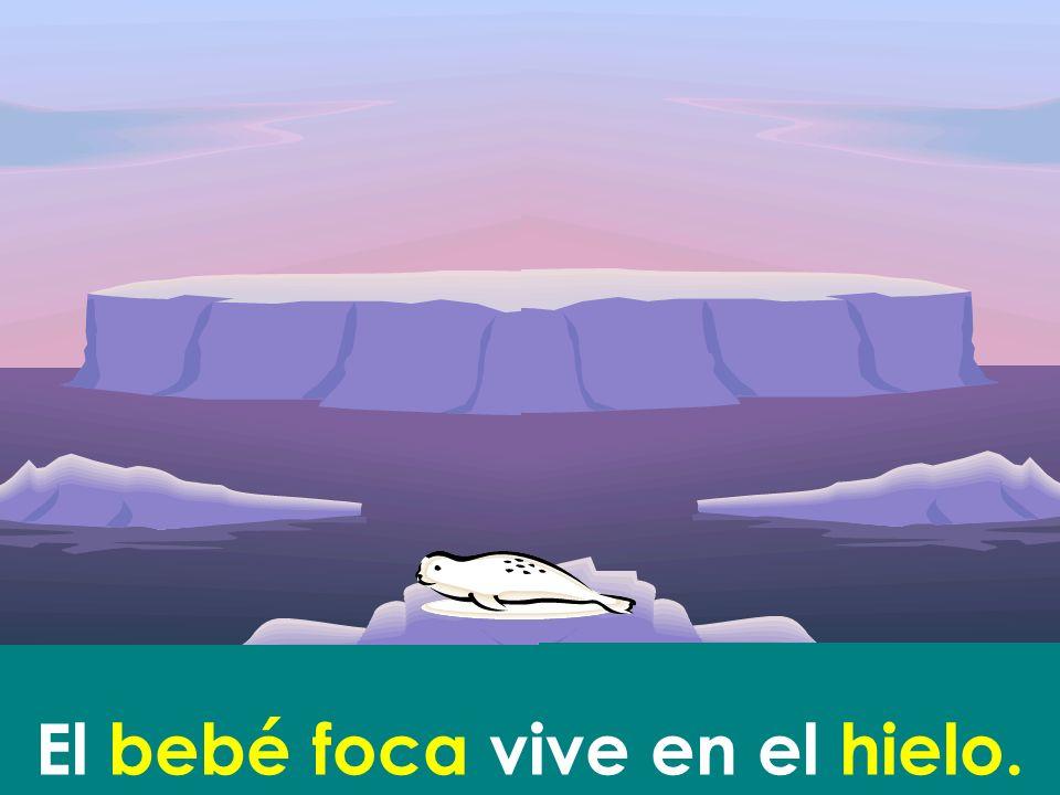 El bebé foca vive en el hielo.