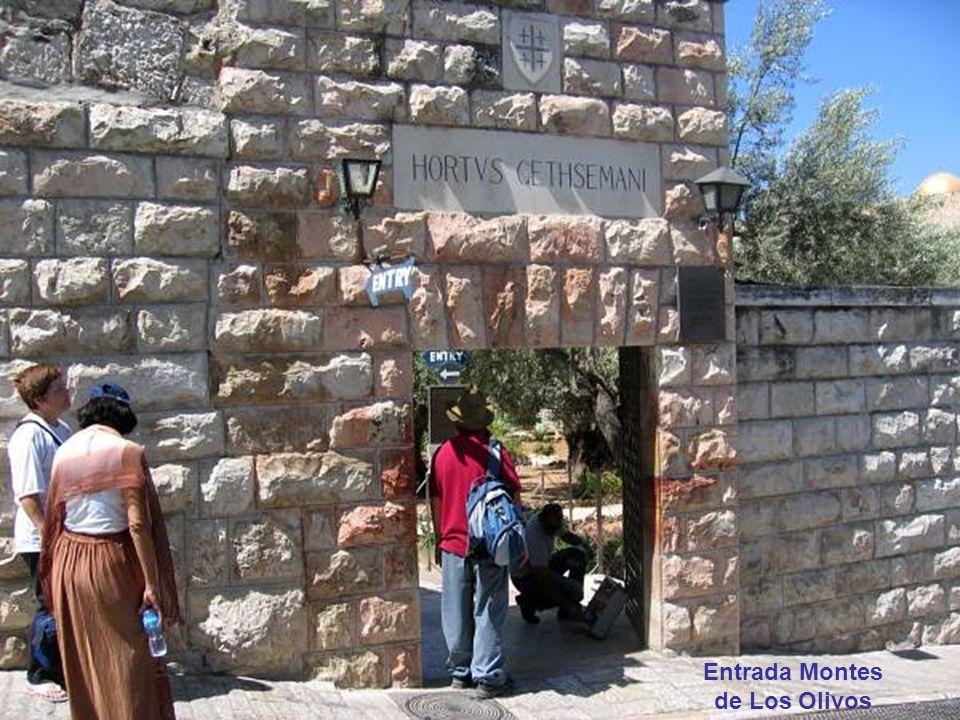 Entrada Montes de Los Olivos