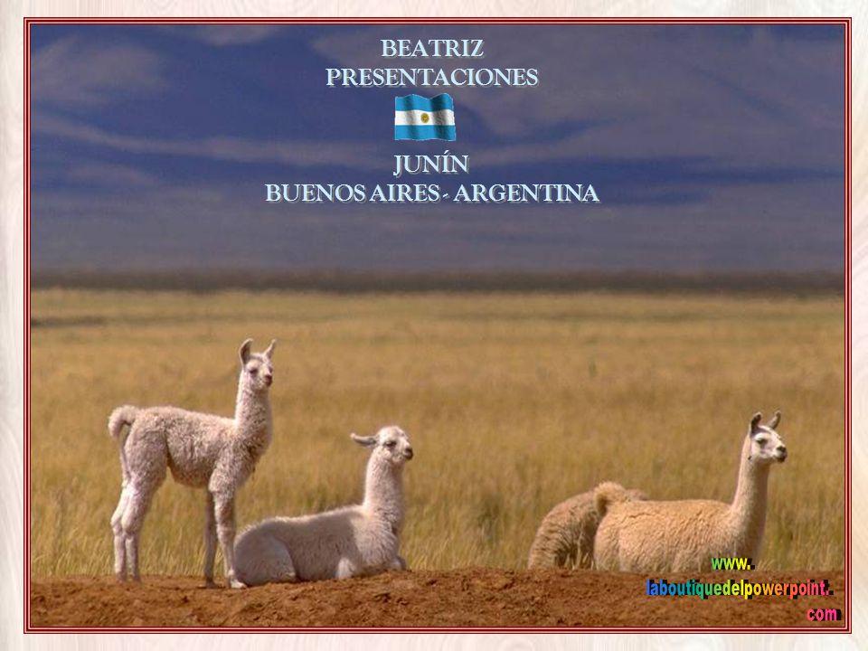 BEATRIZ PRESENTACIONES JUNÍN BUENOS AIRES - ARGENTINA