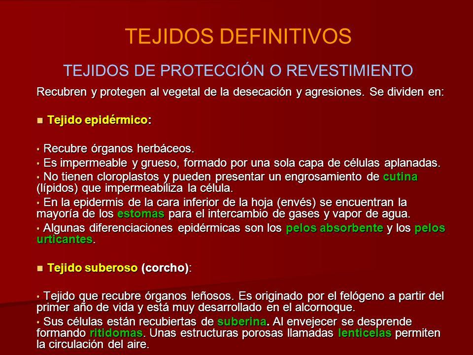 TEJIDOS DE PROTECCIÓN O REVESTIMIENTO