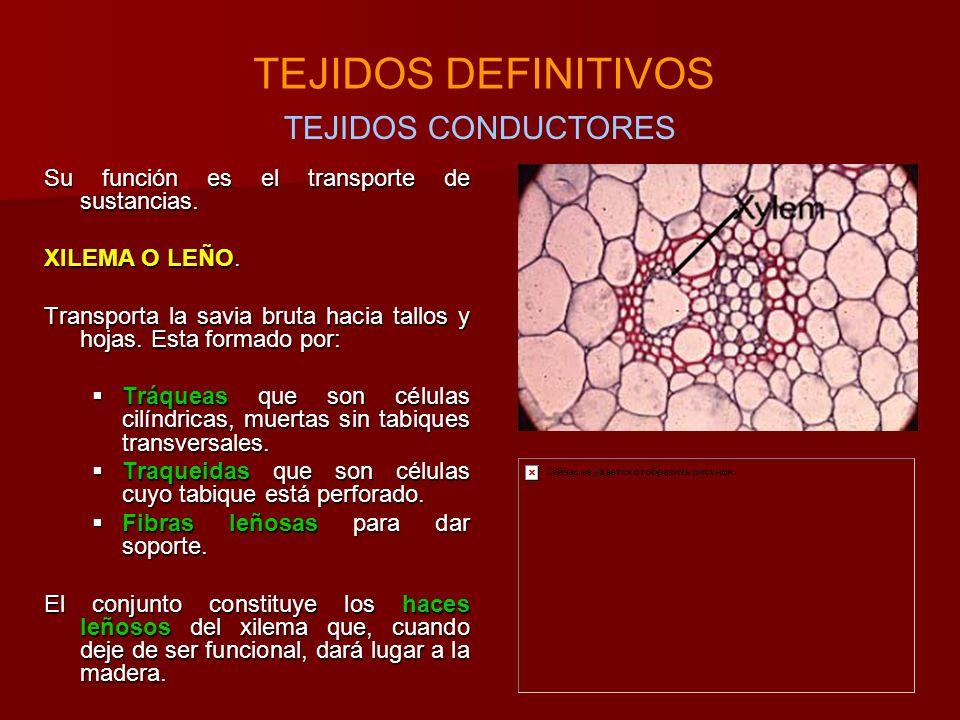TEJIDOS DEFINITIVOS TEJIDOS CONDUCTORES