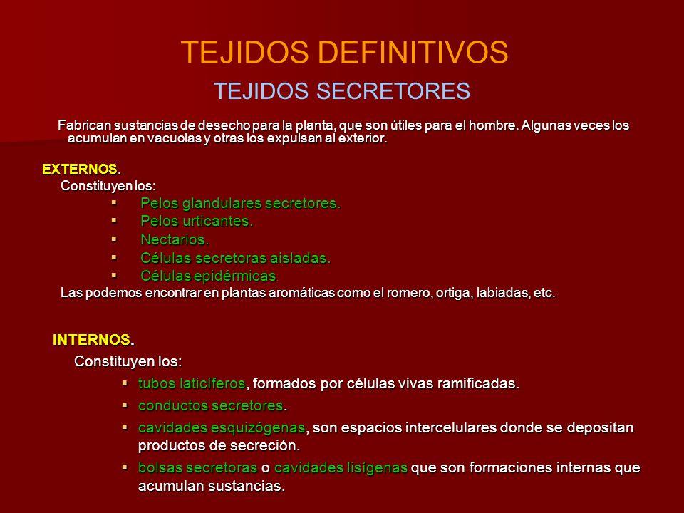 TEJIDOS DEFINITIVOS TEJIDOS SECRETORES Pelos glandulares secretores.