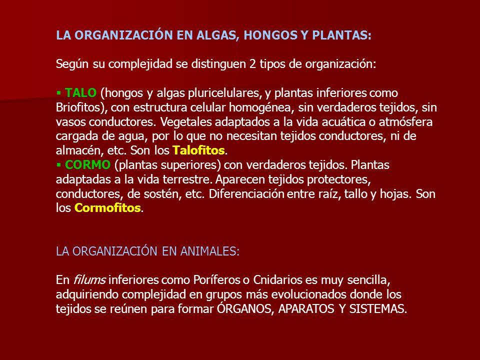 LA ORGANIZACIÓN EN ALGAS, HONGOS Y PLANTAS: