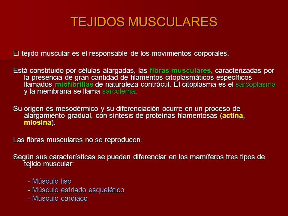 TEJIDOS MUSCULARES El tejido muscular es el responsable de los movimientos corporales.