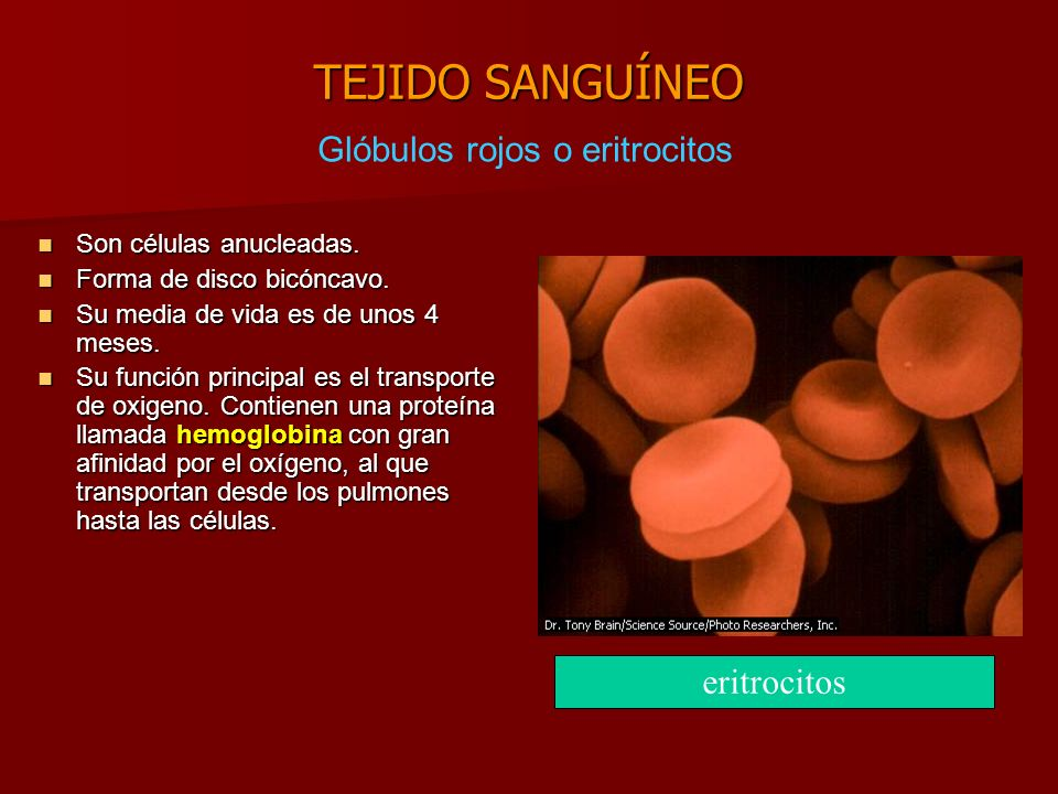 Glóbulos rojos o eritrocitos