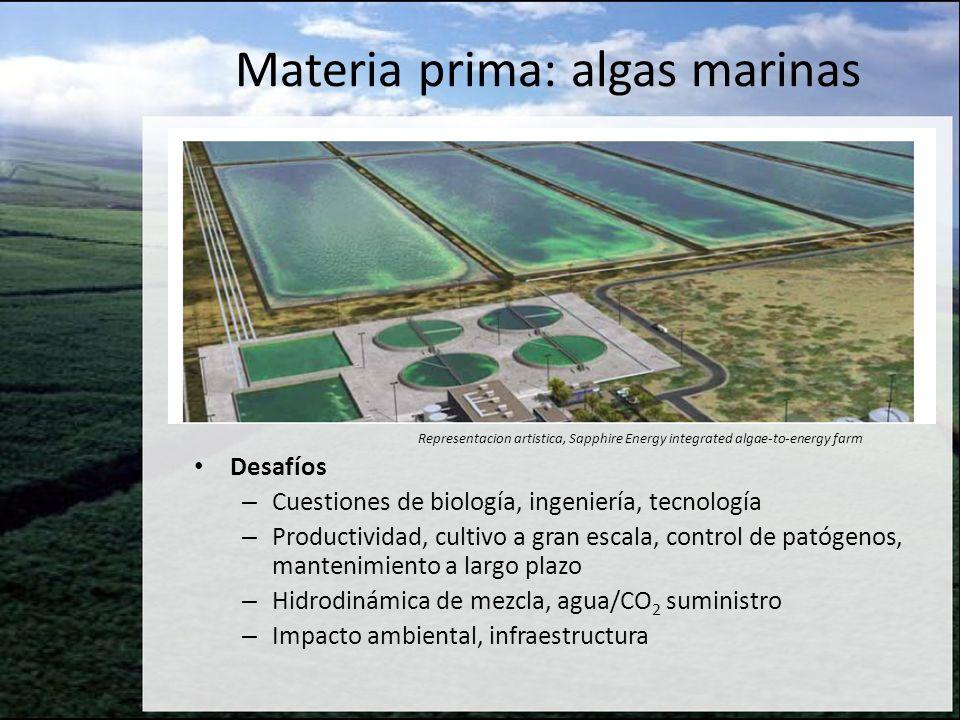 Materia prima: algas marinas