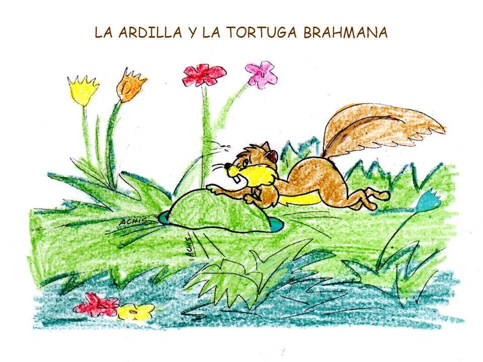 LA ARDILLA Y LA TORTUGA BRAHMANA