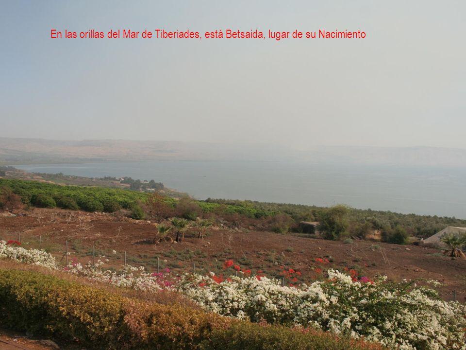 En las orillas del Mar de Tiberiades, está Betsaida, lugar de su Nacimiento